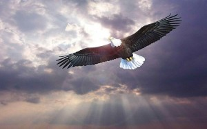 desktop-bird-flying-wallpaper